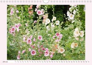 Wunderschöne Malven (Wandkalender 2020 DIN A4 quer)