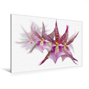 Premium Textil-Leinwand 120 cm x 80 cm quer Dendrobium Orchideen