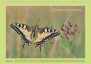 Schmetterlingswelten (Tischkalender 2020 DIN A5 quer)