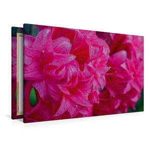 Premium Textil-Leinwand 120 cm x 80 cm quer Rosa Rhododendron