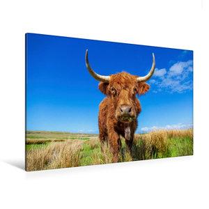 Premium Textil-Leinwand 120 cm x 80 cm quer Highland Kuh
