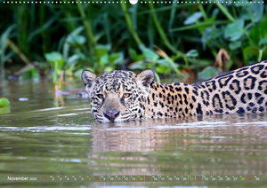 Jaguare im Pantanal