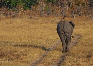 Afrikanische Elefanten (Posterbuch DIN A4 quer)