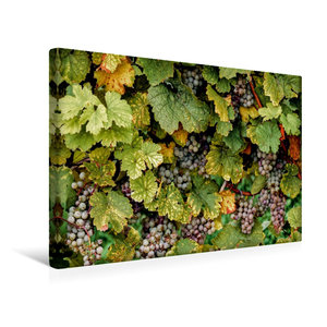 Premium Textil-Leinwand 45 cm x 30 cm quer Rheingau Riesling Tra