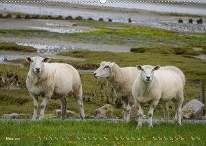 Schafe auf Deich und Düne (Wandkalender 2020 DIN A2 quer)