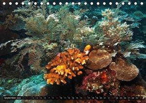 Impressionen tropischer Meere