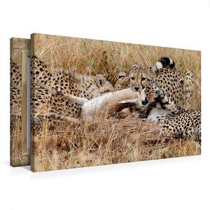 Premium Textil-Leinwand 75 cm x 50 cm quer Geparden mit Beute in