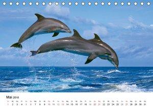 Faszinierende Tierwelt - Mit wilden Tieren durch das Jahr