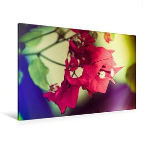 Premium Textil-Leinwand 120 cm x 80 cm quer Bougainvillea Blüten
