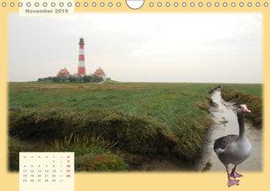 Leuchttürme Schleswig-Holsteins (Wandkalender 2019 DIN A4 quer)