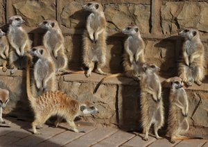 Namibische Tierwelten (Posterbuch DIN A2 quer)