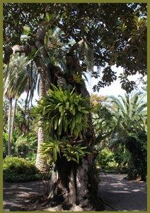 Bäume (Posterbuch DIN A3 hoch)
