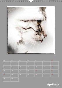 Katzen Blues / Planer (Wandkalender 2019 DIN A3 hoch)