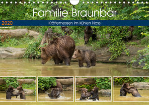 Familie Braunbär - Kräftemessen im kühlen Nass (Wandkalender 202