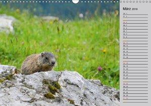 Kleine Nager ? Eichhörnchen Erdmännchen, Murmeltier und Co