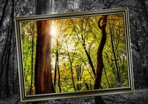 Alles im Rahmen - Sonne im Wald (Tischaufsteller DIN A5 quer)