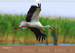Vogelflug-Faszination (Wandkalender 2020 DIN A4 quer)