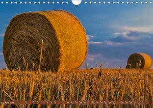 Agrarwirtschaft - Impressionen (Wandkalender 2019 DIN A4 quer)