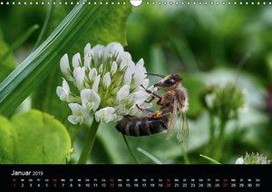 Arbeitsbienen (Wandkalender 2019 DIN A3 quer)