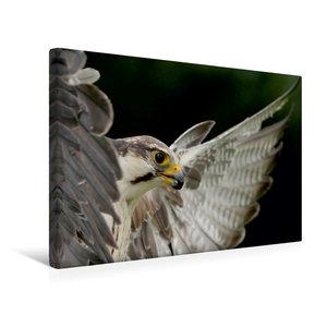 Premium Textil-Leinwand 45 cm x 30 cm quer Falke