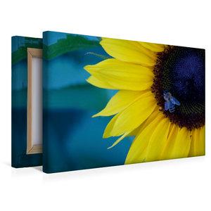Premium Textil-Leinwand 45 cm x 30 cm quer Honigbiene auf Sonnen