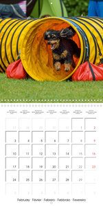 Flying Dogs! (Wall Calendar 2020 300 × 300 mm Square)
