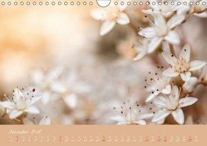 Faszination Blütenwelt