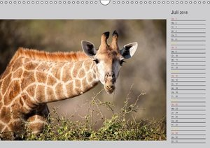 Twigas - Giraffen