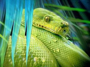 CALVENDO Puzzle Python 1000 Teile Lege-Größe 64 x 48 cm Foto-Puz