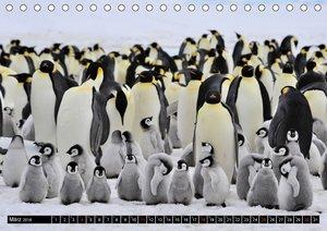 Pinguine - Watscheln im festlichen Kleid