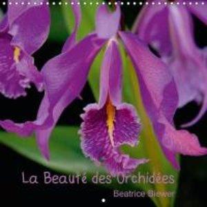 La Beauté des Orchidées (Calendrier mural 2015 300 × 300 mm Squa