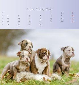 Hunde 2019 - Postkartenkalender
