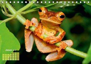 Frösche: Hübsche Hupfer (Tischkalender 2016 DIN A5 quer)