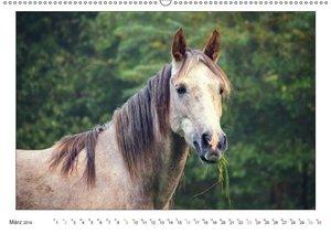 Der Pferdekalender (Wandkalender 2019 DIN A2 quer)