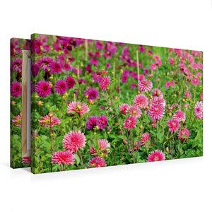 Premium Textil-Leinwand 75 cm x 50 cm quer Blumenbeet mit Dahlie