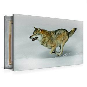 Premium Textil-Leinwand 75 cm x 50 cm quer Wolf verfolgt Beute