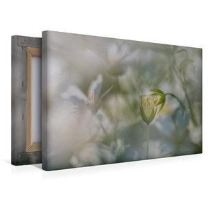 Premium Textil-Leinwand 45 cm x 30 cm quer Die Zuneigung