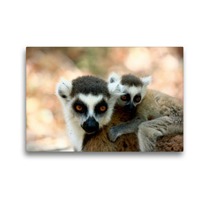 Premium Textil-Leinwand 45 cm x 30 cm quer Katta Lemur mit Baby