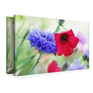 Premium Textil-Leinwand 90 cm x 60 cm quer Kornblume und Roter L