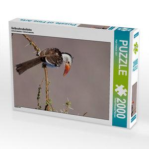 Gelbschnabeltoko 2000 Teile Puzzle hoch