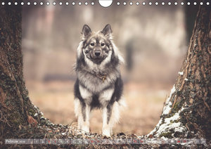 Herzenshunde 2018 (Wandkalender 2018 DIN A4 quer)