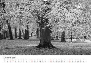 Bäume - Naturschönheiten in schwarz-weiß