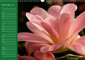 Kamelienträume (Wandkalender 2019 DIN A3 quer)