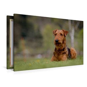 Premium Textil-Leinwand 120 cm x 80 cm quer Airedale-Terrier