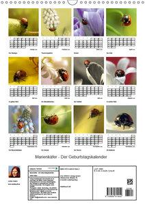 Marienkäfer - Der Geburtstagskalender (Wandkalender 2019 DIN A3