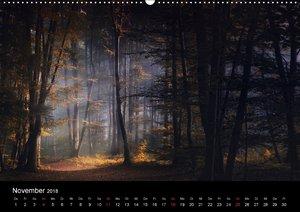 Mysterium Wald