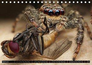 Faszination Makrofotografie: Spinnen (Tischkalender 2018 DIN A5