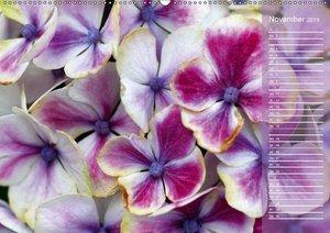 Hortensien / Geburtstagskalender (Wandkalender 2019 DIN A2 quer)