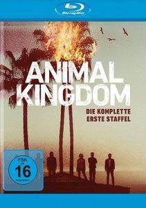 Animal Kingdom. Staffel.1, 1 Blu-ray