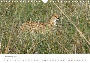 Cheetahs fascinating big cats (Wall Calendar 2018 DIN A4 Landsca